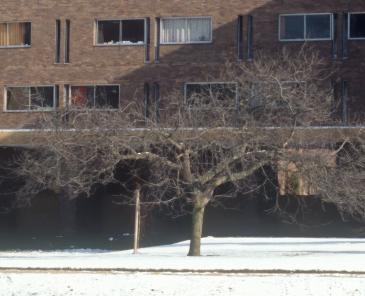 Photo of Newton's Apple Tree
